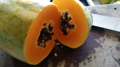 Papaya seeds are useful medicine